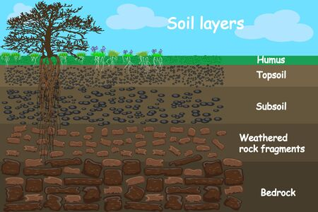 Soil layers. Diagram for layer of soil. Soil layer scheme with grass and roots, earth texture and stones. Cross section of humus or organic and underground soil layers beneath. Vector illustration Illustration