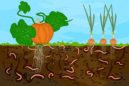Ground cutaway with earthworms and vegetable. Earthworms in garden soil. Air and water passage in the soil created by earthworms. Plant vegetable fresh in compost food layer of soil with worm. Vector 일러스트