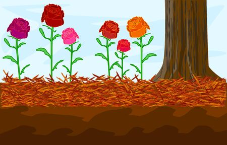 Mulch gardening concept with roses, red mulch and tree trunk. Landscape design mulch. Mulches and mulching for decorative finish, soil protection. Woody waste using as a mulch. Stock vector illustration