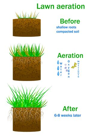 Lawn aeration infographics isolated on white background. Before and after aeration. Enrichment with oxygen, water and nutrients to improve lawn growth. Illustration for article, lawncare, landscaping, lawn grass care service or instruction. Stock vector