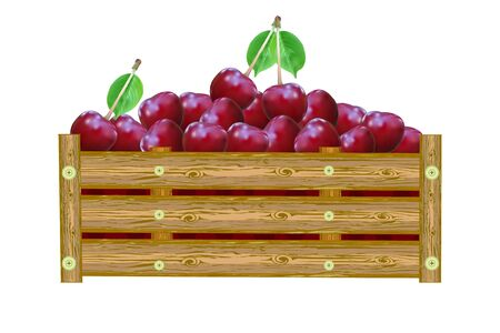 Cherries in box isolated on white background. Crate of juicy berries. Eco farm, market, transportation. Bountiful harvest design element. For label, package, poster, banner or icon. Heap of ripe cherry. Stock vector illustration
