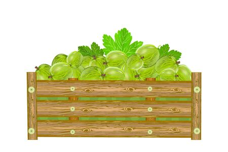 Gooseberries in box isolated on white background. Crate of juicy berries. Eco farm, market, transportation. Bountiful harvest design element. For label, package, poster, banner or icon. Heap of ripe gooseberries. Stock vector illustration