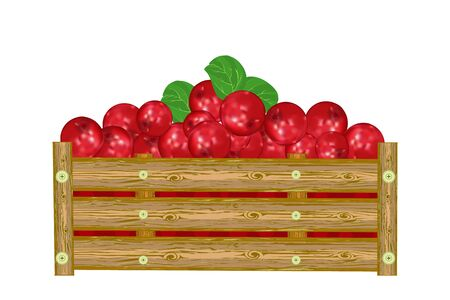 Lingonberry in box isolated on white background. Crate of juicy berries. Eco farm, market, transportation. Bountiful harvest design element. For label, package, poster, banner or icon. Heap of ripe lingonberry. Stock vector illustration Vetores
