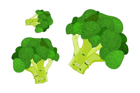 Broccoli isolated on white background. Set fresh broccoli cabbage icon. Vegetable, vegetarian, vegan healthy organic food. Food or element cooking for magazine, book, poster, card, menu cover, web pages. Stock vector illustration Ilustracja