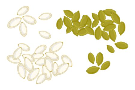 Pumpkin seeds isolated on white background. Whole and peeled pumpkin seeds. Roasted pumpkin seeds in cartoon style, top view. For template label, packing and emblem farmer market design. Stock vector illustration Illustration