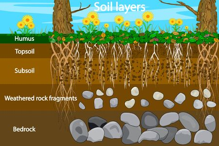 Diagram for layer of soil. Soil layer scheme with grass and roots, earth texture and stones. Cross section of humus or organic and underground soil layers beneath. Stock vector illustration