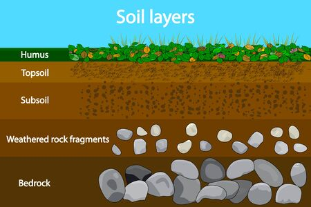 Soil layers. Diagram showing soil layers. Soil layer scheme with grass and  earth texture and stones. Cross section of humus or organic and underground soil layers beneath. Geology infographics. Vector illustration Иллюстрация