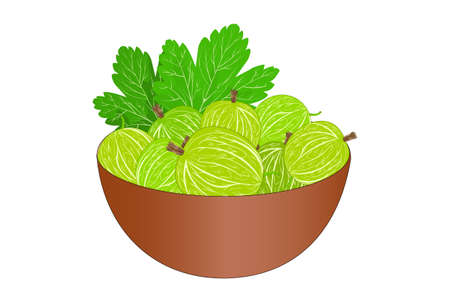 Bowl of delicious juicy gooseberries isolated on white background. Big pile of fresh green gooseberries in the brown bowl. Kitchenware design element. Full plate of beautiful juicy berries. Bountiful harvest. Organic fruit. Stock vector illustration