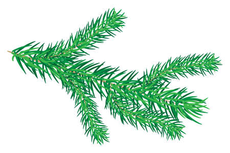 Fir branches isolated on white background. Green lush spruce branch. Detailed Christmas tree twig. Symbol of Christmas and New Year. For holiday cards, banners, flyers, New year party posters. Stock vector illustration Vetores