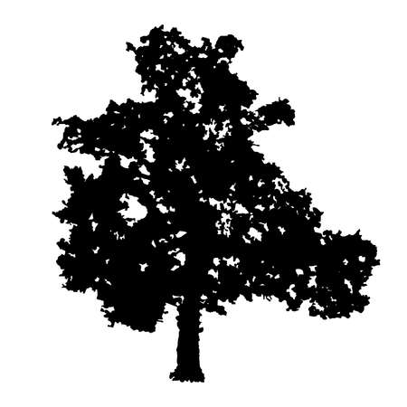 Tree silhouette isolated on white background. Oak tree icon. Black shape realistic tree with leaves silhouette. Outline icon for nature or landscape apps and websites. Flat design. Stock vector illustration Stock Illustratie