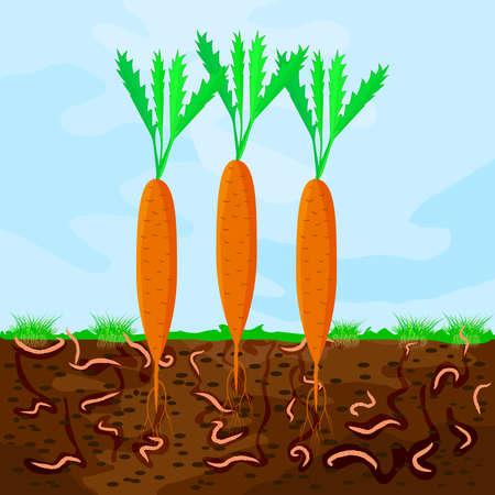Ground cutaway with carrot and earthworm. Earthworms in garden soil. Composting process with organic matter, microorganisms and earthworms. Organic vegetable concept. Stock vector illustration
