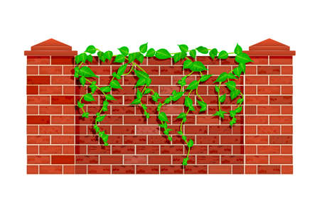 Fence with hanging plant branches isolated on white background.  Lianas on the background of red brick fence or wall. Fence of masonry with leaves of plant loach. Stock vector illustration Ilustrace