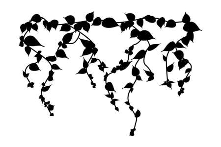 Ivy vine silhouette isolated on white background. Vine plant. Black hanging vine with leaves. Spring or nature plant design. Flat leaves hanging down. Floral pattern. Stock vector illustration