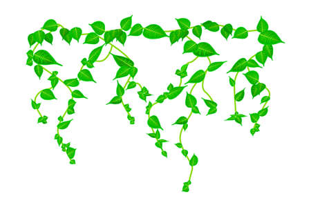 Ivy vine branch isolated on white background. Vine plant. Green hanging vine with leaves. Spring or nature plant design. Leaves hanging down. Floral pattern. Climbing plants. Stock vector illustration Çizim