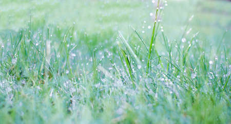 Juicy lush green grass on meadow with drops of water dew in morning light. Green border of grass. Stok Fotoğraf