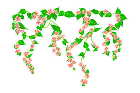 Branches climbing pink rose flower with leaves and buds isolated on white background. Spring or nature plant design. Decor for balcony facades, fence or wall. Leaves hanging down. Floral pattern. Stock vector illustration Çizim