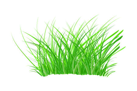 Tuft of grass isolated on white background. Spring bush of fresh grass. Green thick weed. Big tussock. Design element of nature. Stock vector illustration Çizim