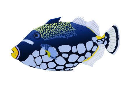 Tropical fish isolated on white background. Clown triggerfish. Sea animal, maritime character. Balistoides conspicillum. Side view. Stock vector illustration Çizim