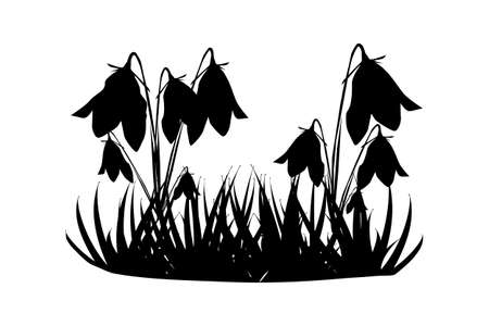 Silhouette of grass and flowers isolated on white background. Meadow with wild herbs. Bluebells growing of lawn. Garden bed. Spring and summer grass. Floral icon. Stock vector illustration