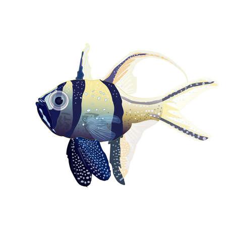 Tropical fish isolated on white background. Banggai cardinalfish, marine or saltwater aquarium fish. Sea animal, maritime character. Stock vector illustration