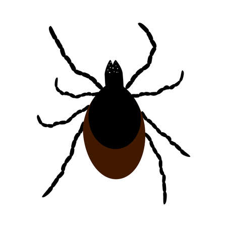 Mite icon isolated on white background. Wild or domestic tick parasite. Flat cartoon mite icon symbol or sign. Insect control, pest removal services. Stock vector illustration