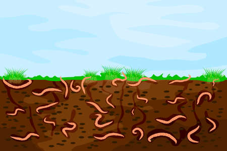 Ground cutaway with earthworms. Worms in garden soil. Air and water passage in the soil created by earthworms. Composting process with organic matter and microorganisms. Stock vector illustration