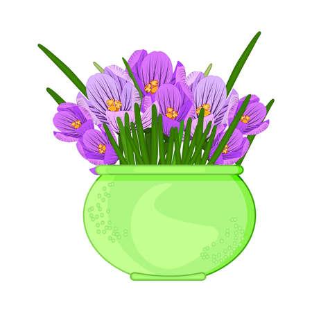Crocus flowers in pot isolated on white background. Terracotta flowerpot with purple crocuses. Houseplant in green vase for interior decor of home or office. Saffron flower. Spring seasonal. Stock vector illustration