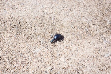 The first spring Ground beetles, begin to live on a cold ground. Springtime
