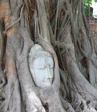 Head of Sandstone Buddha at Ayutthaya , Thailand photo