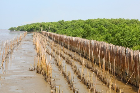 Bamboo barrier for protect the forest photo