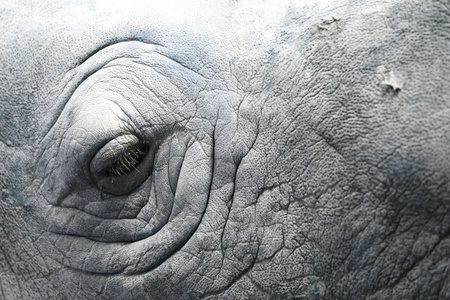 The rhino eye and show the rhino skin    They need to survive in this world