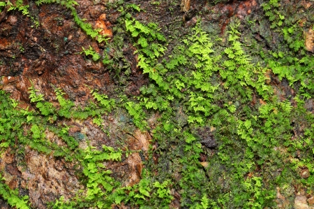 Green moss background growing near the waterfall  photo