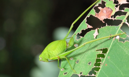 Macro of young grasshopper in the forest  photo