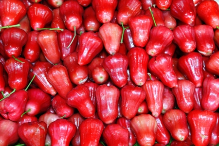 Plenty of Rose apple in Thailand Stock Photo