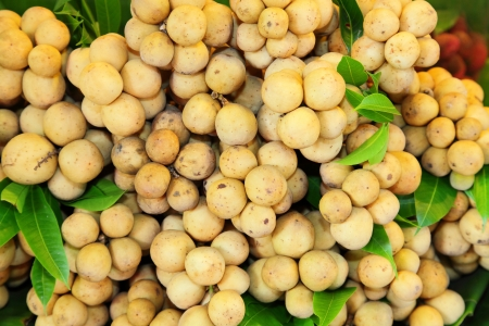 Fresh Lansium domesticum  Longkong  in Thailand photo
