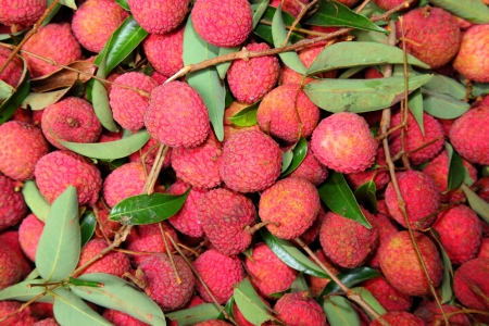 lychee or  Litchi fruit, a local and favourite fruit in Thailand Stock Photo - 13928956