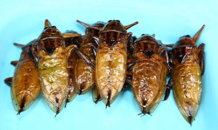 serv: Fried Giant water bug on the dish  It s ready to eat and favorite for Thailand market