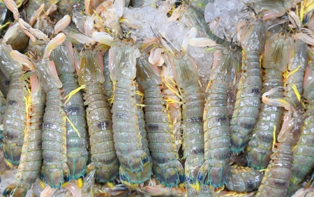 Mantis shrimp with ice in fresh market in Thailand Stock Photo - 14349952