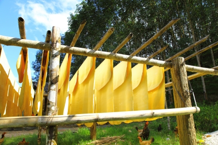 Rubber tree farmland  The folk use the bamboo hang the rubber and let the sunshine dry it   photo