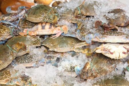 blue swimmer crab: Fresh raw flower crab or blue crab in Thailand fresh market Stock Photo