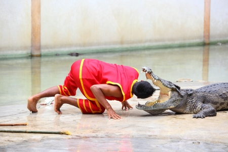 SAMUTHPRAKARN, THAILAND - SEPTEMBER 1 : The man stretch his head into the crocodile jaw in crocodile show at Samuthprakarn crocodile farm on September 1,2012 in Samuthprakarn,Thailand Stock Photo - 15240147