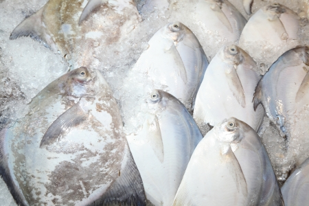 White Pomfret Fish in street maket of Thailand Stock Photo - 15623202