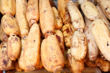 Fresh Lotus root or Water lily root in Thailand market  It s favorite for Chinese people to make herb and good ingredient