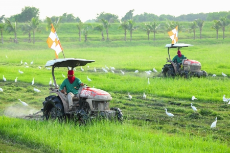 thialand: BANGKOK,THAILAND - OCTOBER 19: The worker is cutting the grass with Egrets finding for its insect at Suvarnabhumi International airport   on October 19,2012 in Bangkok,Thailand