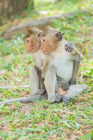 Lovely Monkey  Long-Tailed Macaque  friends never die photo
