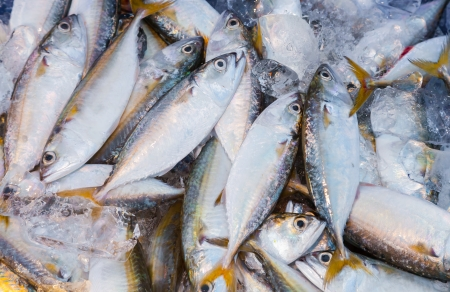 Top view of fresh Mackerel in Thailand street market photo