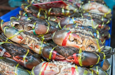 Serrated mud crab  Scylla serrata  tied and ready for sale in street market of Thailand Stock Photo - 17048464
