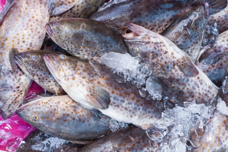 Fresh Grouper Fish  Cromileptes altivelis  in the street market of Thailand photo