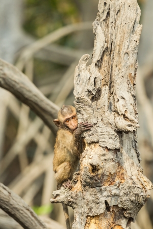 The lovely small Monkey  Long-Tailed Macaque  catch on the tree in the forest photo