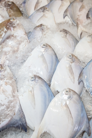 The fresh Pomfret fish was sale in Thailand street market  Stock Photo - 18787610